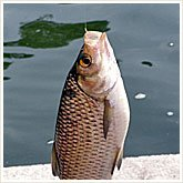 345_fish_165