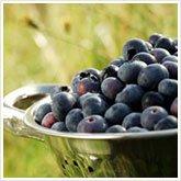 375_freshberries_165